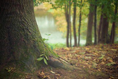tree-trunk-569275