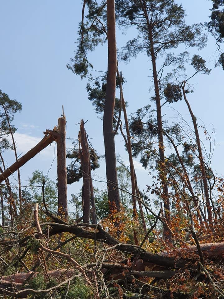 Zerstörte Bäume in Alzenau.