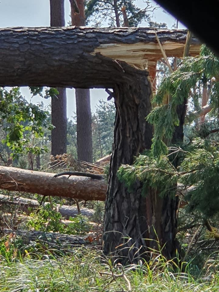 Das Ausmaß der Sturmschäden in Kahl und Alzenau.